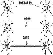 脳細胞のネットワーク